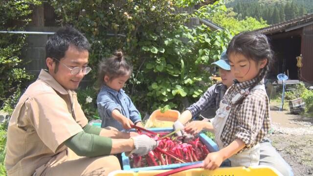 8/1(日)午前10時放送『新 窓をあけて九州』は、MBC制作「ルビー色の農園だより」を放送します。