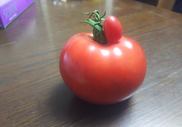 トマトのトマト